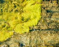 Leef algen, golven en rotsen Stock Fotografie