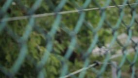 Leef beer achter netten van een kooi stock footage