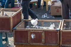 Leef duiven in kooien worden en voor verkoop worden tentoongesteld gehouden die die stock foto