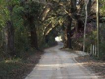 Leef eiken bomen op een landweg Royalty-vrije Stock Foto's