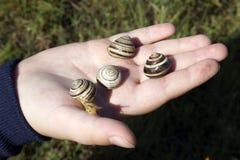 Leef slakken op de palm van uw hand stock fotografie