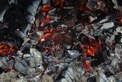 Leef steenkool Royalty-vrije Stock Afbeeldingen