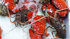 Leef zeekreeft en krab in een box stock footage