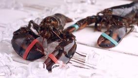 Leef zeekreeften die zich rond bewegen stock videobeelden