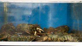 Leef zeekreeften voor verkoop bij fiskmarkt Stock Afbeelding