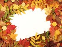 Leeg blad van document op een de herfstframe Stock Fotografie