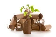 Leeg die toiletpapierbroodje in een planter wordt gemaakt Royalty-vrije Stock Fotografie