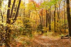 Leeg Forest Footpath in de Herfst stock fotografie