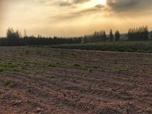 Leeg gebied met tractor het gevolgde voorbereidingen treffen voor het kweken van nieuwe gewassen Stock Afbeelding