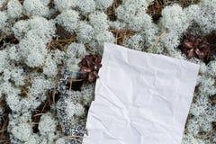 Leeg leeg, verfrommeld document underfoot in het hout Stock Afbeelding
