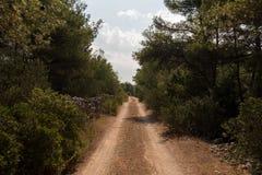 Leeg macadam en de stoffig wildernis van de wegtrog en bos van Kroatisch eiland Brac De aard van de wegtrog met groen bos stock fotografie