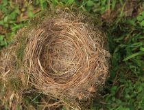 leeg nest Royalty-vrije Stock Afbeelding