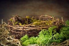 Leeg nest met mos royalty-vrije stock foto's
