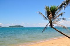 Leeg tropisch strand met palmen stock afbeelding