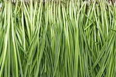 Leek Stock Images