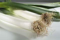 Leek. An edible plant (Allium porrum) related to the onion and having a white, slender bulb and flat, dark-green leaves Stock Photos