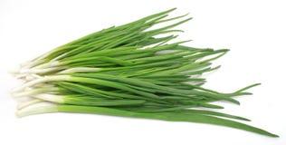 Leek. Nice fresh green leek isolated over white royalty free stock photography