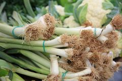 Leek on Farmers Market Stock Photo
