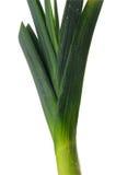 Leek isolated on white background. Leek isolated on a white background stock image