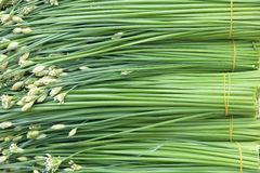Leek peduncle royalty free stock images