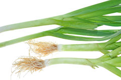 Leek Plant. Chinese Leek Plant With Roots stock photos