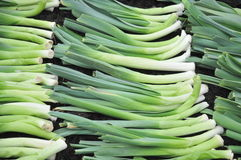 Leek. Several leekes arranged nicely besides each other, waiting to get used Royalty Free Stock Photos