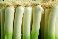 The leek. Is a vegetable that belongs, along with onion and garlic, to the genus Allium, currently placed in family Amaryllidaceae, subfamily Allioideae Stock Photo