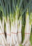 The leek vegetable, garlic. Plant Stock Image
