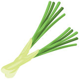 Leeks Royalty Free Stock Photo