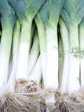 Leeks Royalty Free Stock Images