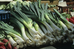 Leeks Stock Photo