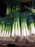 Leeks. Fresh leeks at organic farmer's market royalty free stock photos