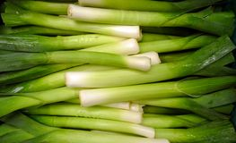 Leeks background Royalty Free Stock Photo