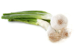 Leeks in studio Stock Photo