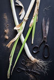 Leeks and Vintage Scissors on a Black Background Royalty Free Stock Image