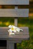 Leelavadee, Plumeria, flor tropical no banco longo Imagens de Stock