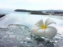 Leelawadde, Plumaria-bloem op de waterlijst in tropisch Azië stock fotografie