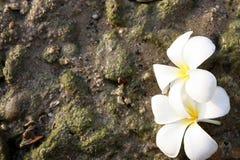 leelawadee岩石白色 免版税库存图片
