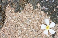 leelawadee沙子白色 免版税图库摄影