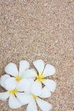 leelawadee沙子白色 免版税库存照片