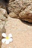 leelawadee沙子白色 免版税库存图片