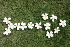 leelawadee цветка Стоковые Фото