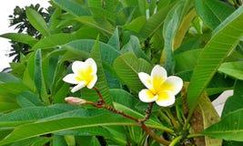 LeeLawadee Image libre de droits