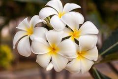 LeeLawadee 免版税图库摄影