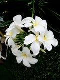 Leelawadee blanco Fotos de archivo