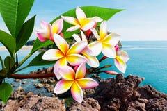 Leelawadee blomma på stranden Royaltyfria Bilder