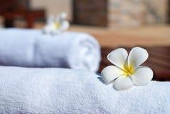 Leelawadee Blume im Badekurort lizenzfreie stockbilder