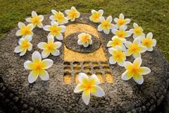 Leelawadee-Blumen auf dem Buddha-Abdruck Lizenzfreies Stockfoto