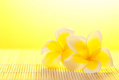Leelawadee flower on bamboo background Stock Photos