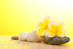 Leelawadee flower and pebbles on bamboo background Stock Photos